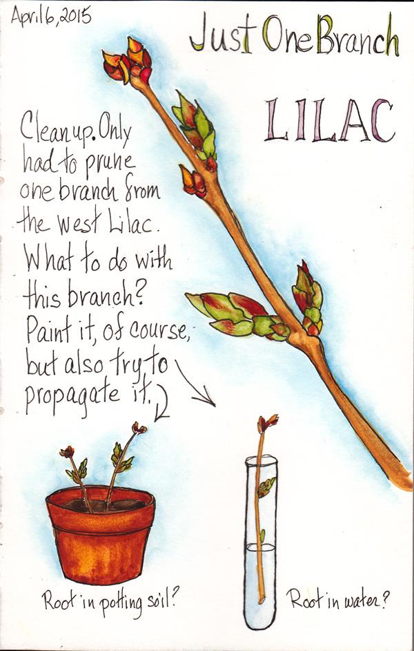 lilacbranch
